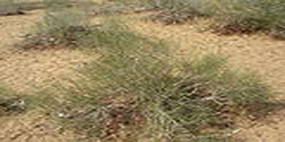 Desert-Flora and Fauna